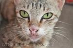 Mata si Kucing